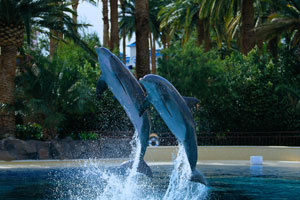 Mirage Dolphin Habitat & Secret Garden