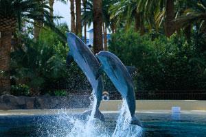 Mirage Dolphin Habitat & Secret Garden