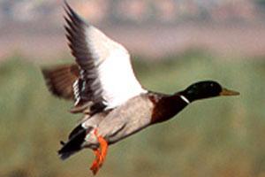 Henderson Bird Preserve